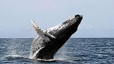Whale Watching Ballet Packages